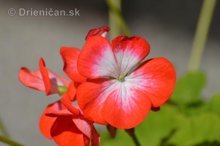 kvety oktober zahrada_10