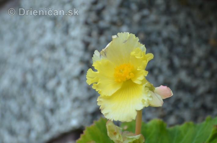 kvety oktober zahrada_12