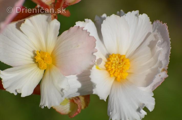 kvety oktober zahrada_14