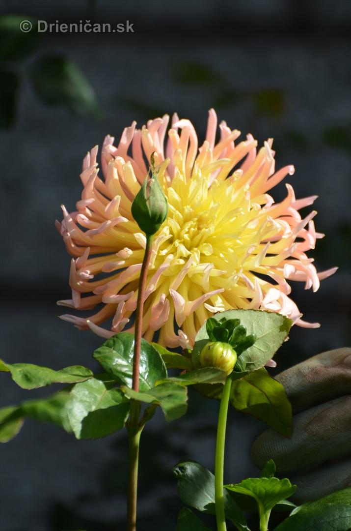 kvety oktober zahrada_15