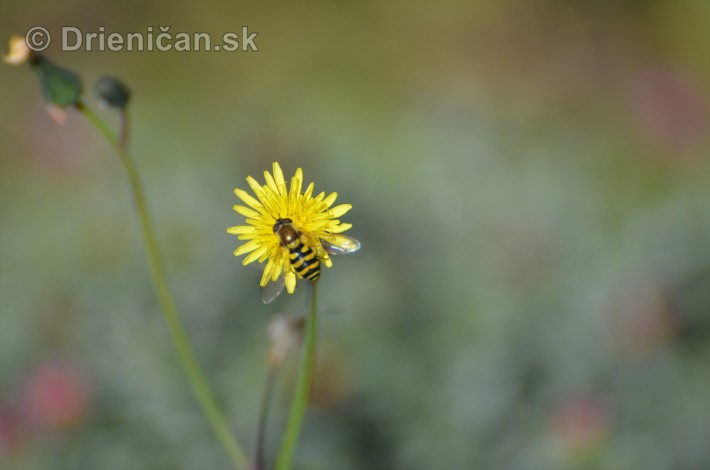 kvety oktober zahrada_16