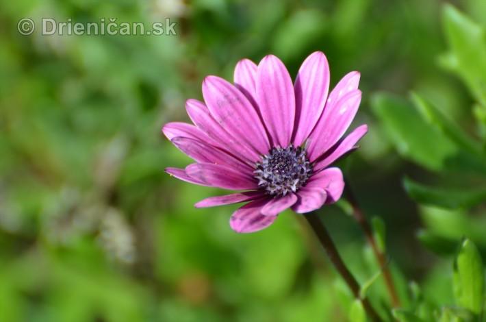 kvety oktober zahrada_17