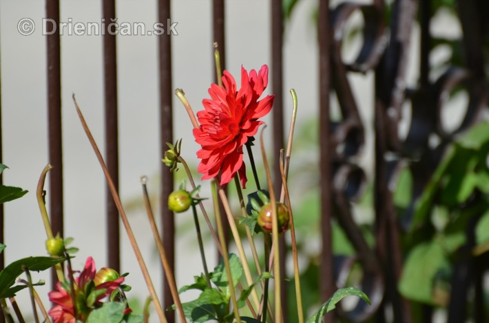 kvety oktober zahrada_18