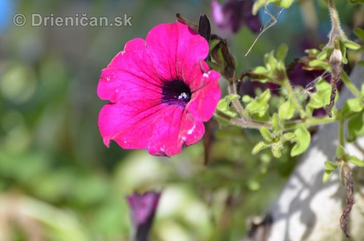 kvety oktober zahrada_19