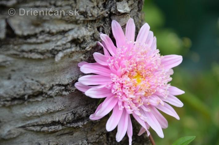 kvety oktober zahrada_21