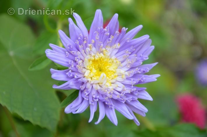 kvety oktober zahrada_22