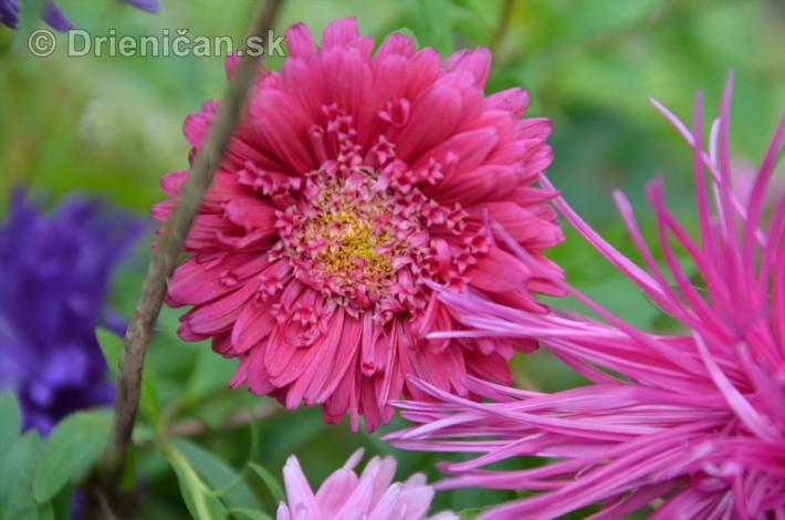 kvety oktober zahrada_23