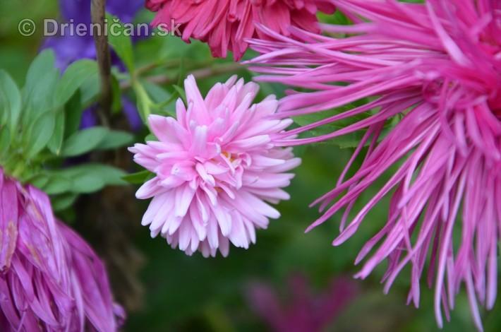 kvety oktober zahrada_25