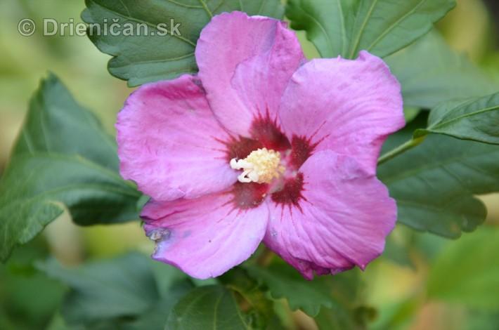 kvety oktober zahrada_28