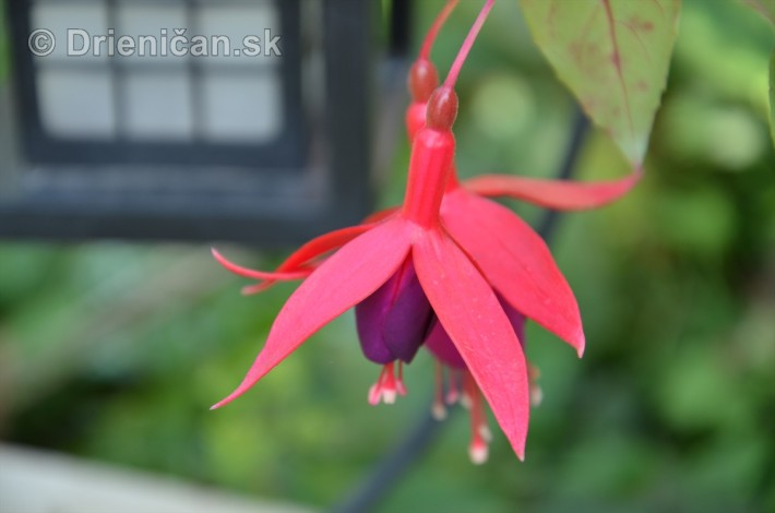 kvety oktober zahrada_30