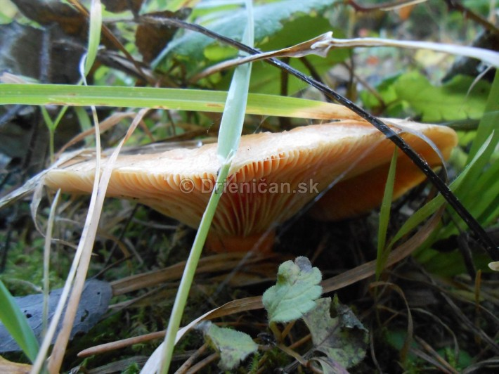 rydziky oktober foto_03