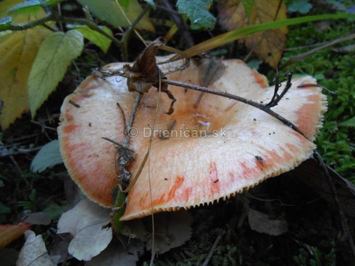 rydziky oktober foto_11