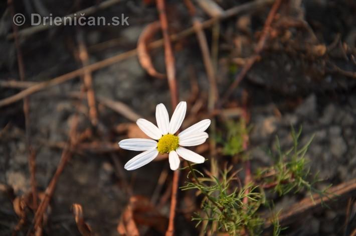 drienica v novembri_09