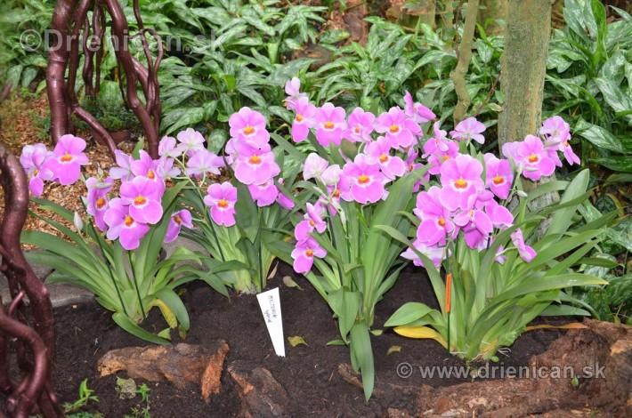 Vystava orchidei KE_02