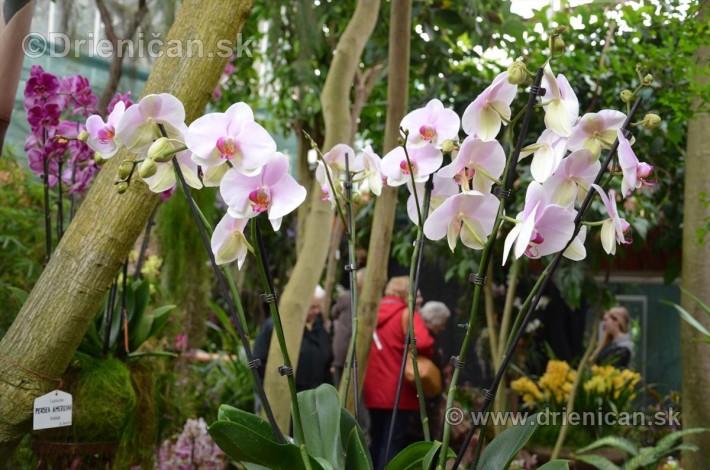 Vystava orchidei KE_05