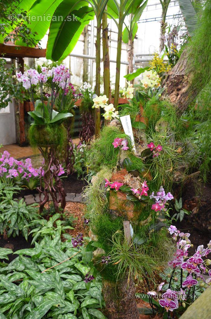 Vystava orchidei KE_06