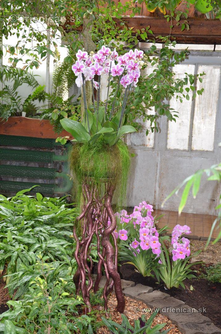 Vystava orchidei KE_07