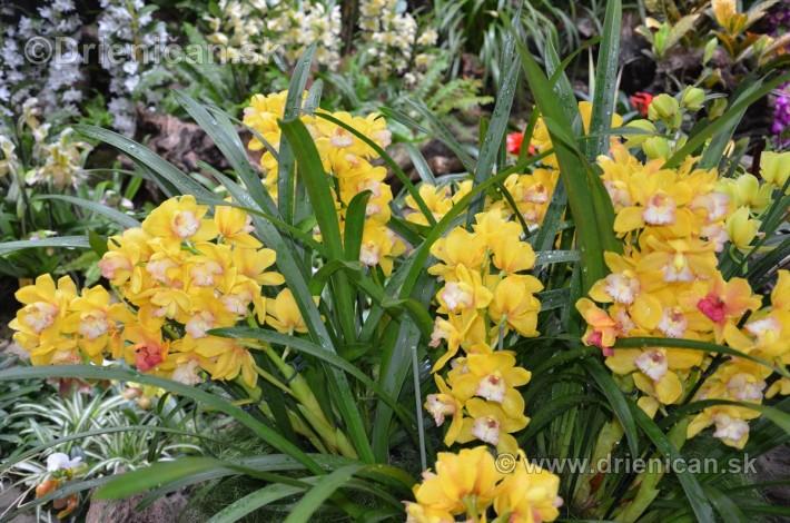 Vystava orchidei KE_09