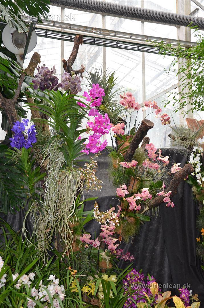 Vystava orchidei KE_13
