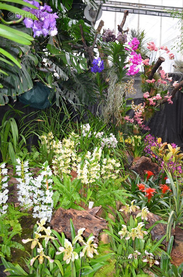 Vystava orchidei KE_14