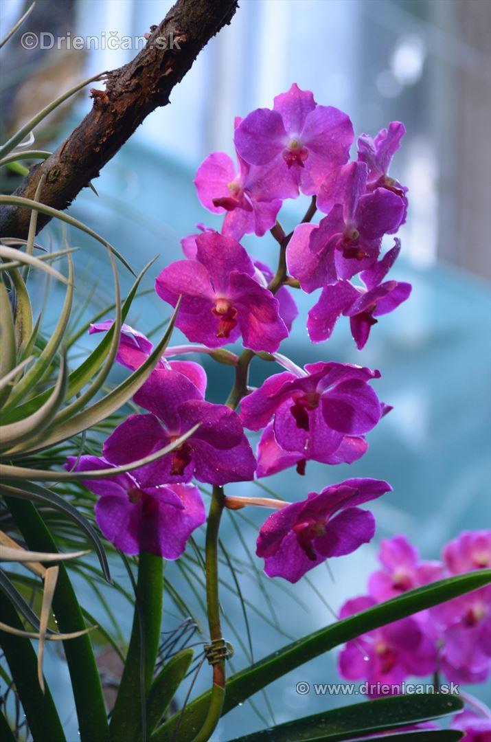 Vystava orchidei KE_15