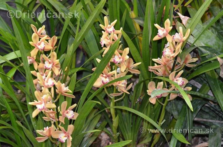 Vystava orchidei KE_17