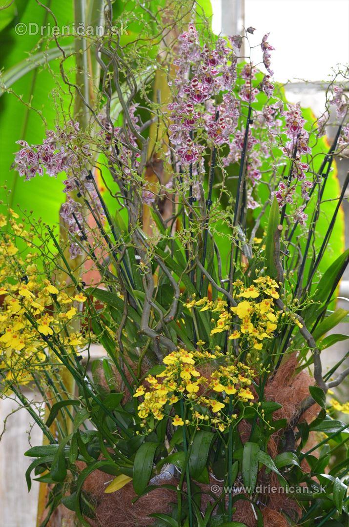 Vystava orchidei KE_18