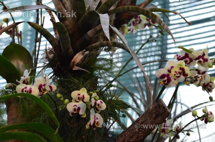 Vystava orchidei KE_19