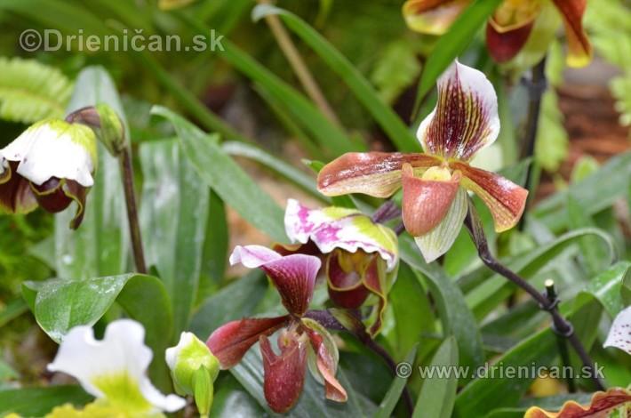 Vystava orchidei KE_22