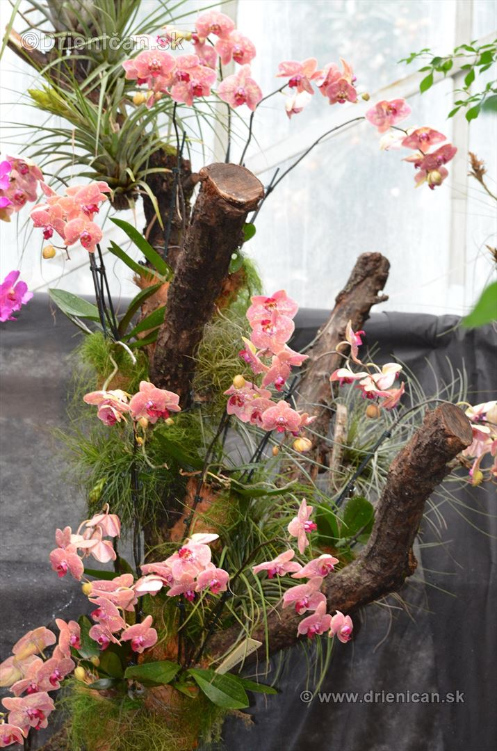 Vystava orchidei KE_23