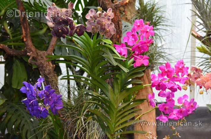 Vystava orchidei KE_24