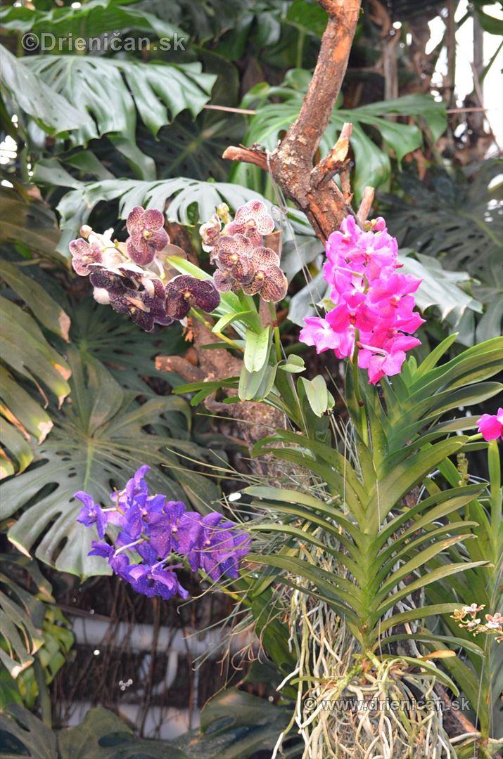 Vystava orchidei KE_26