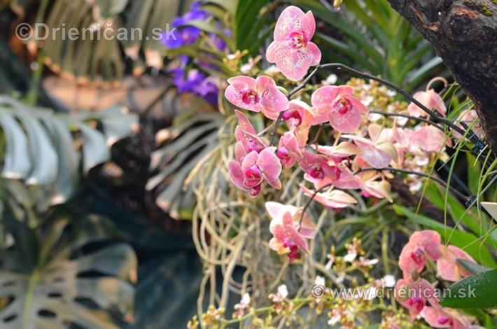 Vystava orchidei KE_33