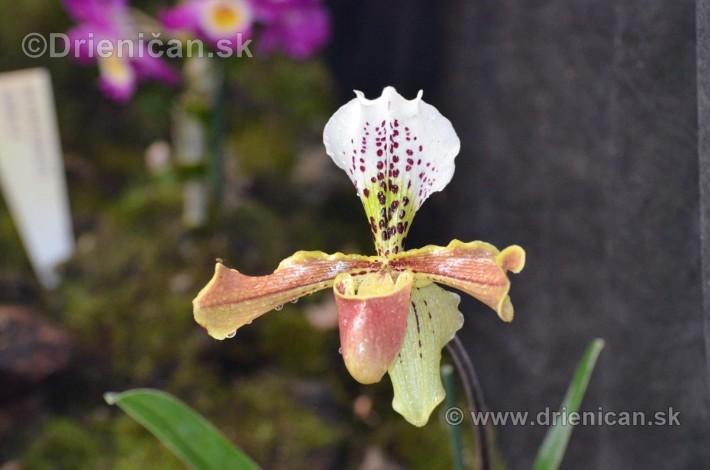 Vystava orchidei KE_34