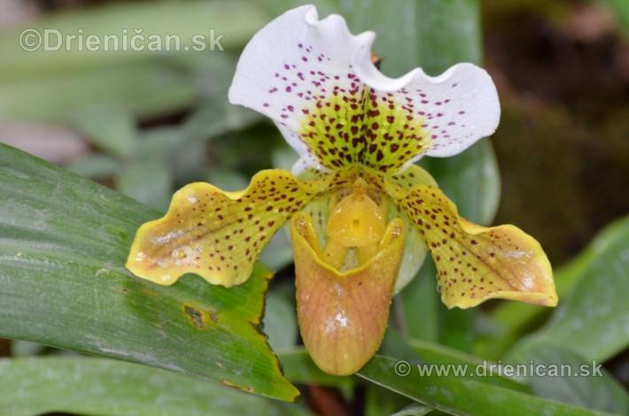 Vystava orchidei KE_35