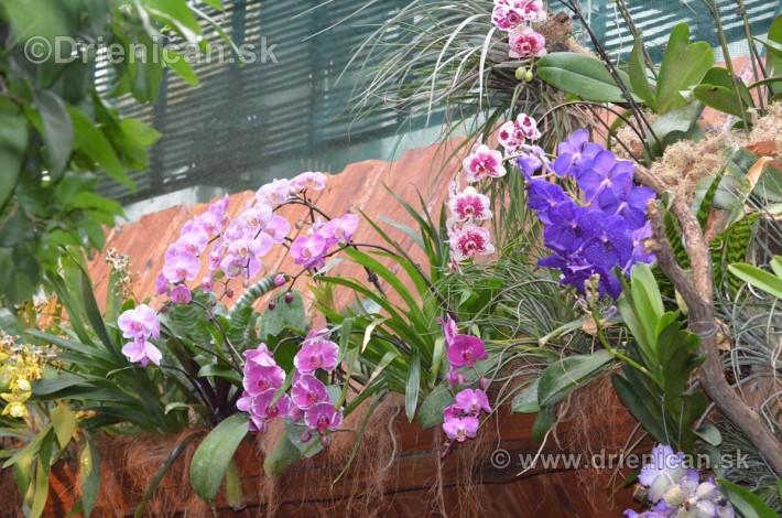 Vystava orchidei KE_36