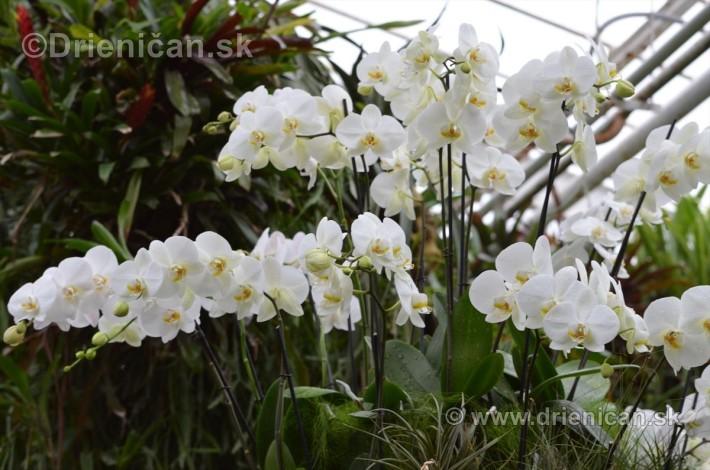 Vystava orchidei KE_43
