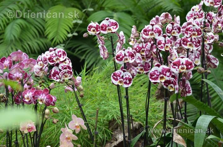 Vystava orchidei KE_44