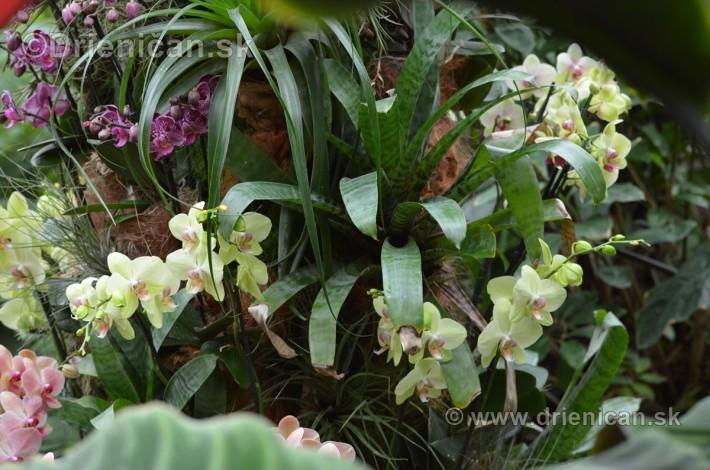Vystava orchidei KE_48