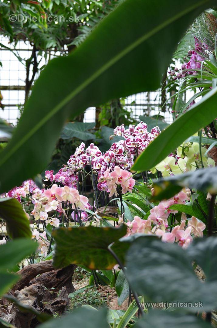 Vystava orchidei KE_49