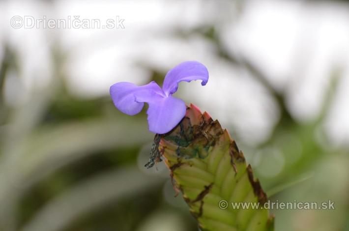 Vystava orchidei KE_51