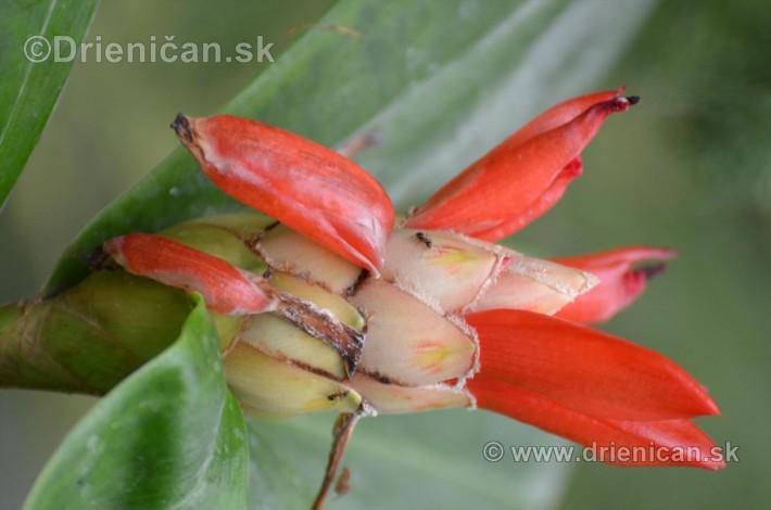 Vystava orchidei KE_52