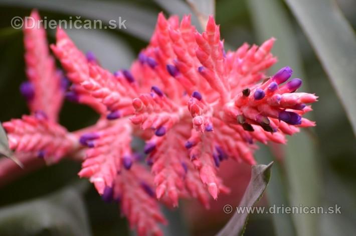 Vystava orchidei KE_55