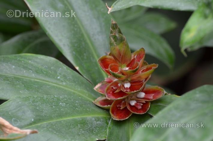 Vystava orchidei KE_56