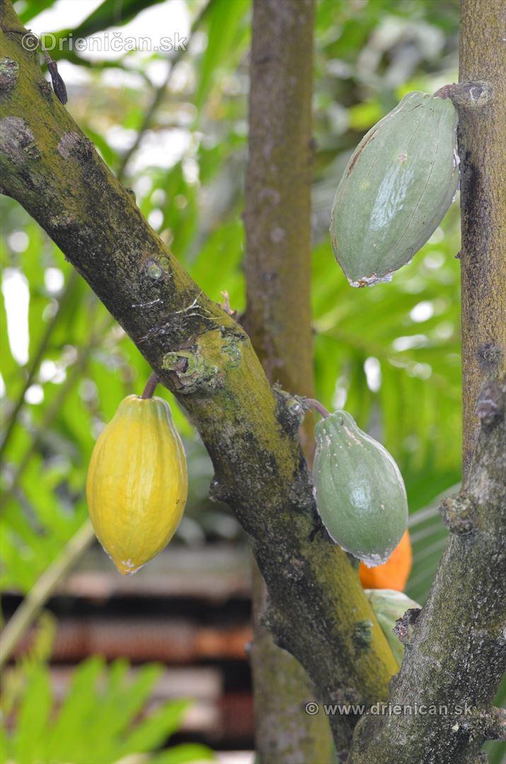 Vystava orchidei KE_58