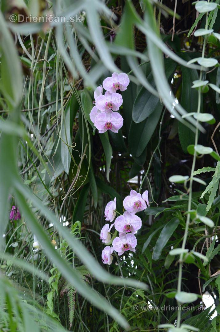 Vystava orchidei KE_60