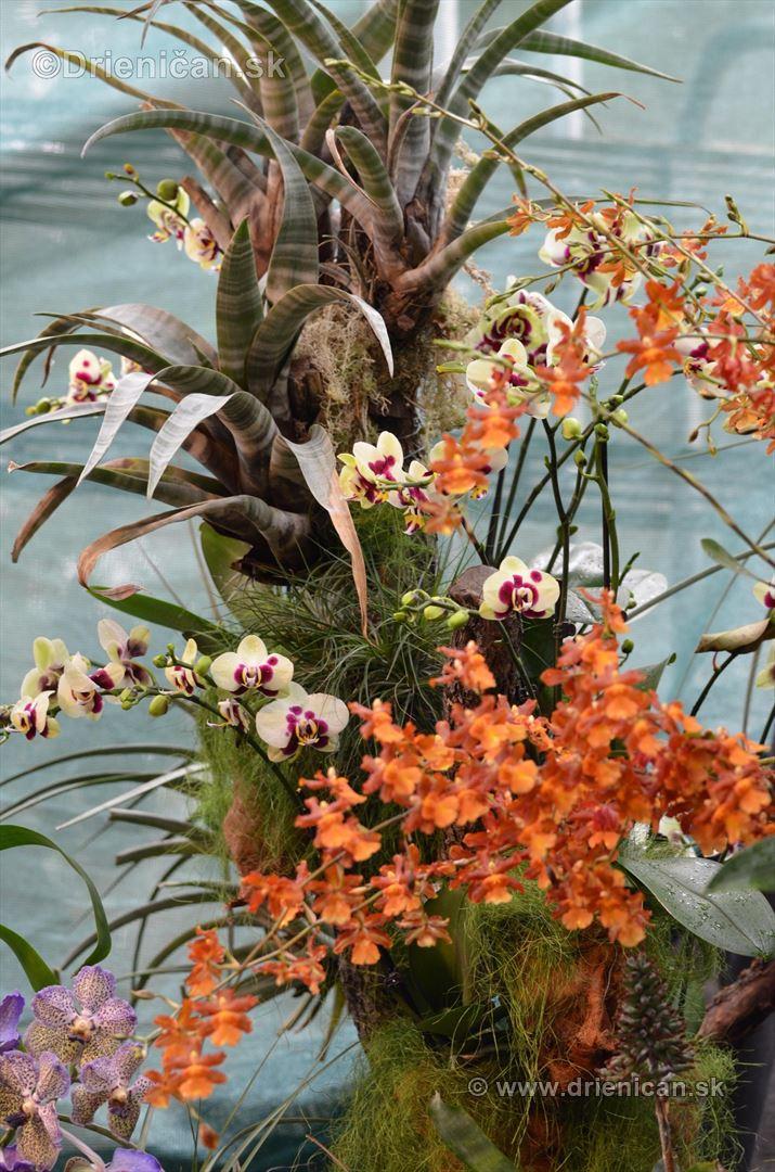 Vystava orchidei KE_64