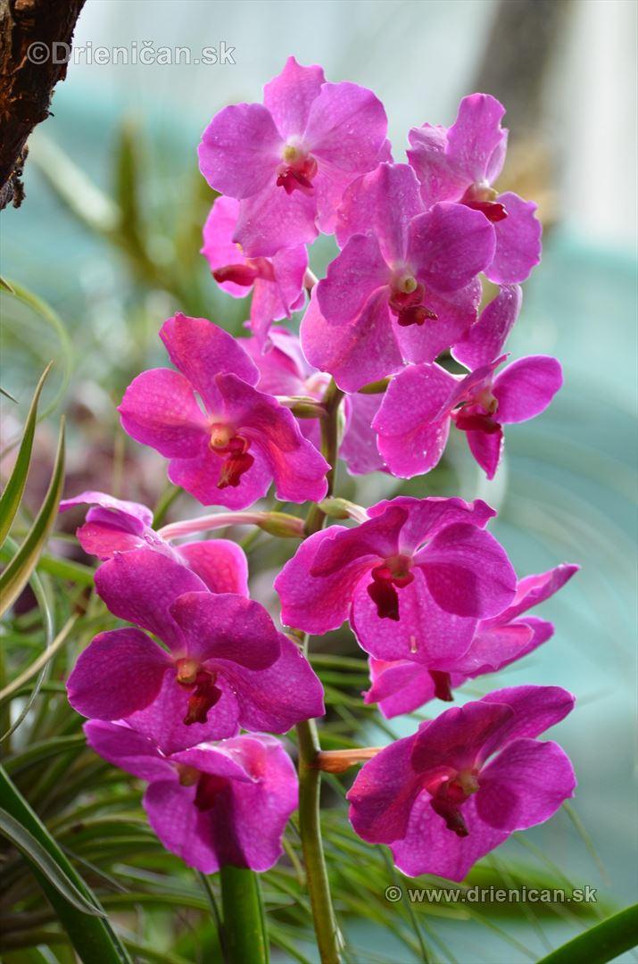 Vystava orchidei KE_68