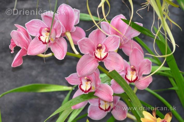 Vystava orchidei KE_71