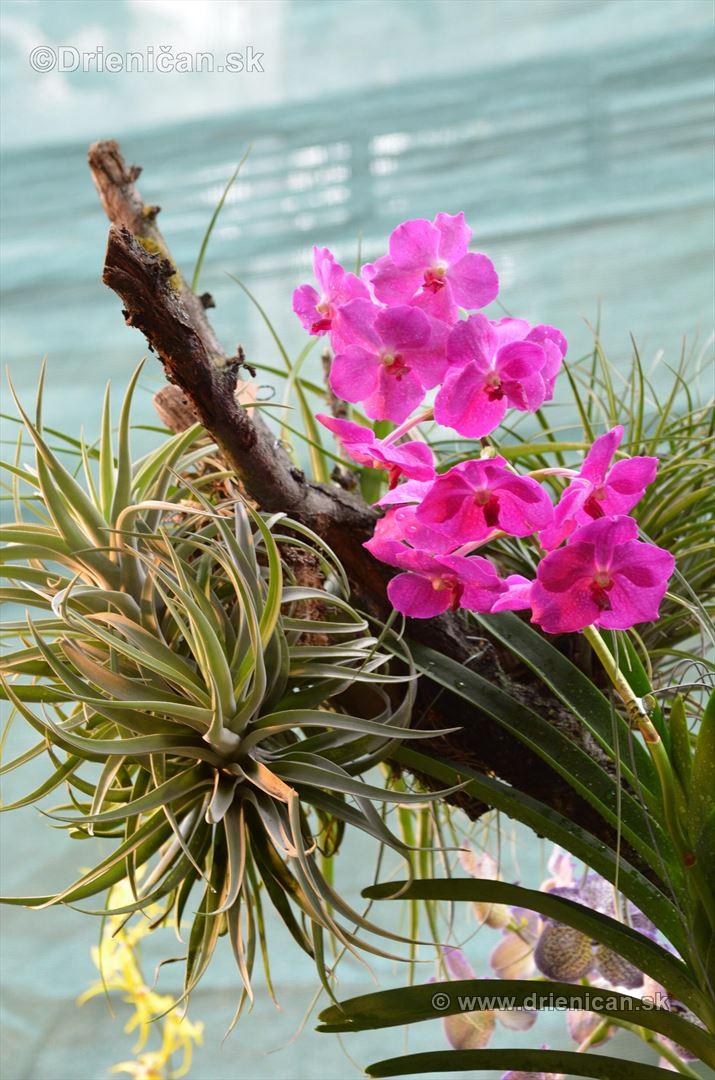 Vystava orchidei KE_74